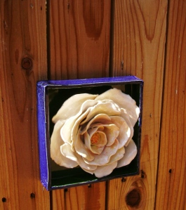 white rose flower box side view
